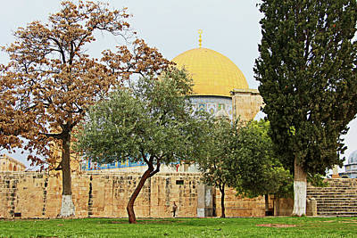 Photograph - Aqsa Mixed Trees by Munir Alawi