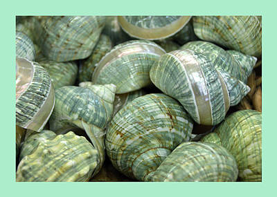 Photograph - Aqua And Sea Green Shells by Carla Parris