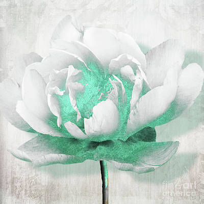 Teal Flowers Painting - Aquarelle White Peony With Turquoise by Mindy Sommers