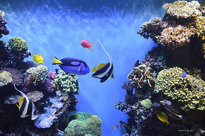Tropical Fish Digital Art - Aquarium 2 by Barbara Snyder