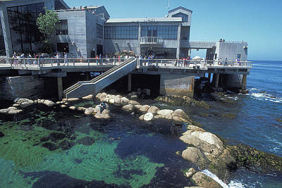 Photograph - Aquarium At Monterey In California by Carl Purcell