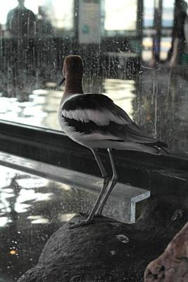Photograph - Aquarium Bird by Michele Myers