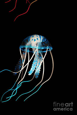 Exotic Creatures Photograph - Aquarium Blue by Jorgo Photography - Wall Art Gallery