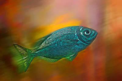 Photograph - Aquarium Fish by Maria Coulson