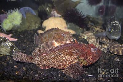 Photograph - Aquarium Fish by Steven Parker