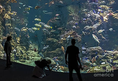 Photograph - Aquarium by Kate Brown