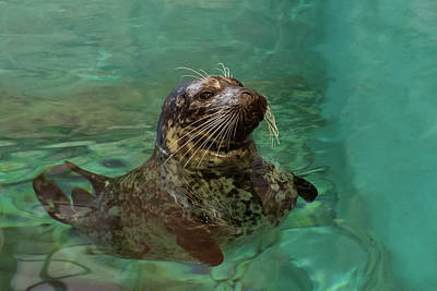 Photograph - Aquarium Seal  by Terry DeLuco