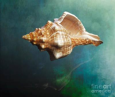 Aquatic Dreams V Art Print by George Oze
