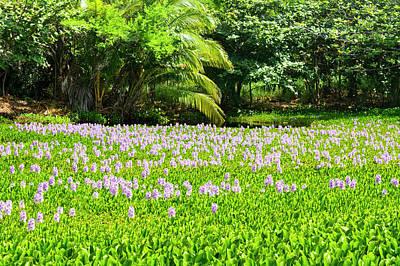 Photograph - Aquatic Flowers In Kona Hawaii by Joe Belanger