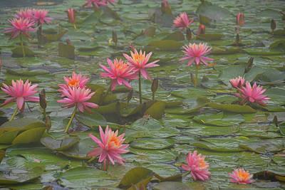 Photograph - Aquatic Garden by Jamart Photography