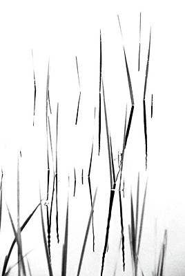 Photograph - Aquatic Reeds Black And White by Debbie Oppermann