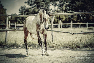 Photograph - Arab Horse In Paddock by Dimitar Hristov
