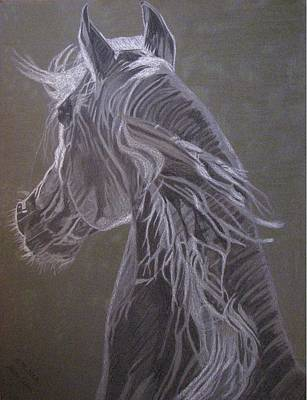 Art Print featuring the drawing Arab Horse by Melita Safran