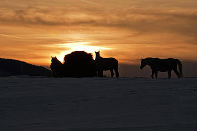 Art Print featuring the photograph Arab Horses At Sunset by Daniel Hebard