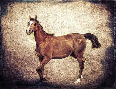Digital Art - Arabian Filly by Rusty R Smith