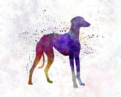 Arabian Greyhound In Watercolor Art Print by Pablo Romero