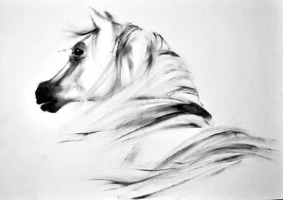 Arabian Horse 3 By Diana Van Art Print