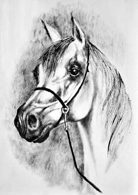 Arabian Horse 7 By Diana Van Art Print