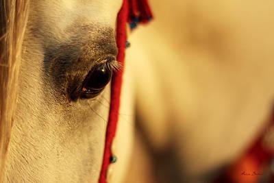 Konik Photograph - Arabian Horse by Artur Baboev