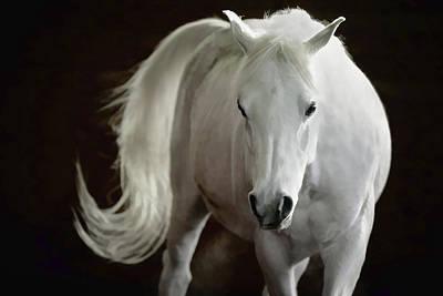 Photograph - Arabian Horse by Athena Mckinzie