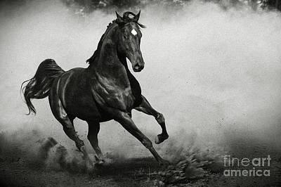 Photograph - Arabian Horse by Dimitar Hristov