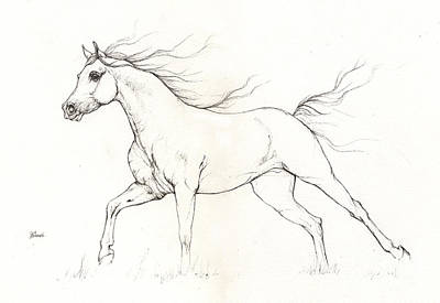 Running Horses Drawing - Arabian Horse Drawing 2015 12 20 by Angel Tarantella