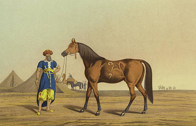 Horse Drawing - Arabian Horse by Henry Thomas Alken