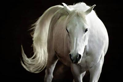 Photograph - Arabian Horse II by Athena Mckinzie