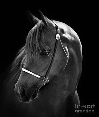 Photograph - Arabian Horse In Black And White by Sandra Huston