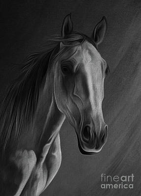 Suckling Painting - Arabian Horse Portrait 02 by Gull G