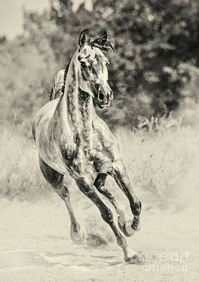 Photograph - Arabian Horse Running On Sunny Meadow by Dimitar Hristov