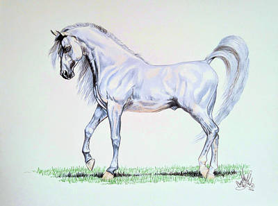Painting - Arabian Stallion  by Cheryl Poland