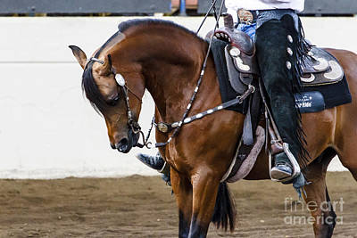 Photograph - Arabian Show Horse 13 by Ben Graham