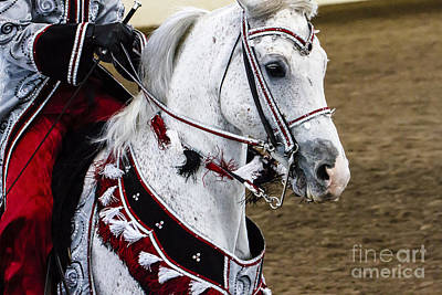 Photograph - Arabian Show Horse 14 by Ben Graham