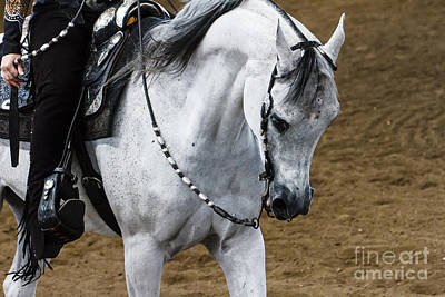 Photograph - Arabian Show Horse 15 by Ben Graham