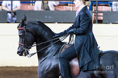 Photograph - Arabian Show Horse 16 by Ben Graham