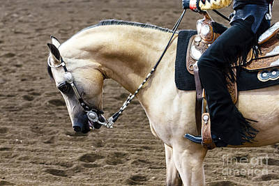 Photograph - Arabian Show Horse 17 by Ben Graham