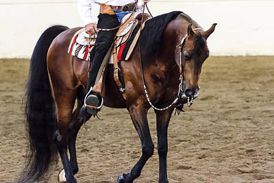 Photograph - Arabian Show Horse 3 by Ben Graham