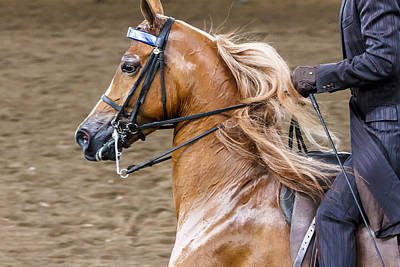 Photograph - Arabian Show Horse 6 by Ben Graham