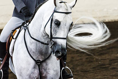 Photograph - Arabian Show Horse 8 by Ben Graham
