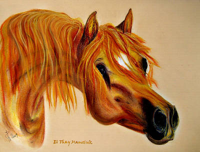 Arabian Horses Mixed Media - Arabian Stallion El Thay Mameluk by ELA-EquusArt