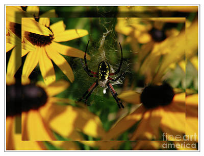 Arachnid Beauty Art Print by Deborah Johnson