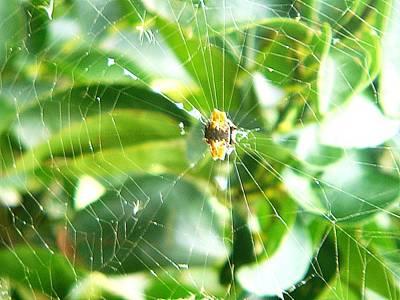 Photograph - Arachnid II by Paulo Zerbato