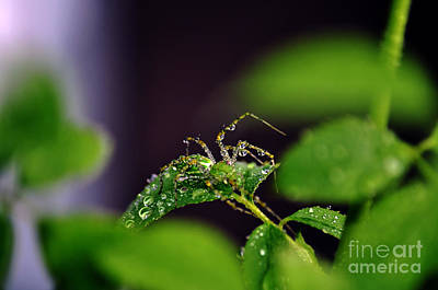 Photograph - Arachnishower by Clayton Bruster