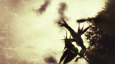 Photograph - Arachnophobia by Isabella F Abbie Shores