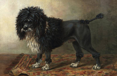 Pooch Painting - Aramis, A Water Spaniel by Miss Brown