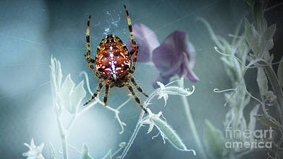 Photograph - Araneus Spider With Flowers by Eva-Maria Di Bella