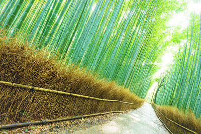 Arashiyama Bamboo Trees Forest Road God Ray Tilted Art Print