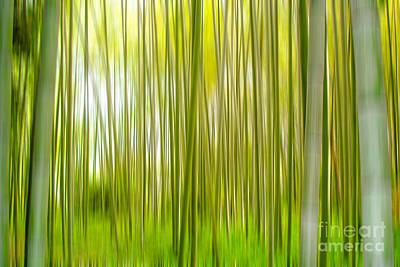 Bamboo Wall Art - Photograph - Arashiyama by Delphimages Photo Creations