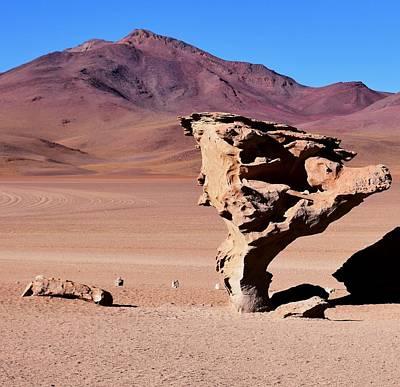 Photograph - Arbol De Piedra - Stone Tree by Sandy Taylor